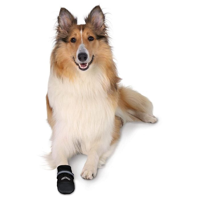 Best Dog Boots In India